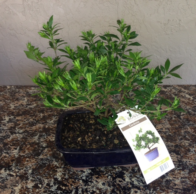 The Soothing Company Offers Thousands Of Soothing Products For Your Home  And Garden. Everything From Wall Fountains To Bonsai Trees To Even A Modern  ...