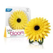 daisy-bloom