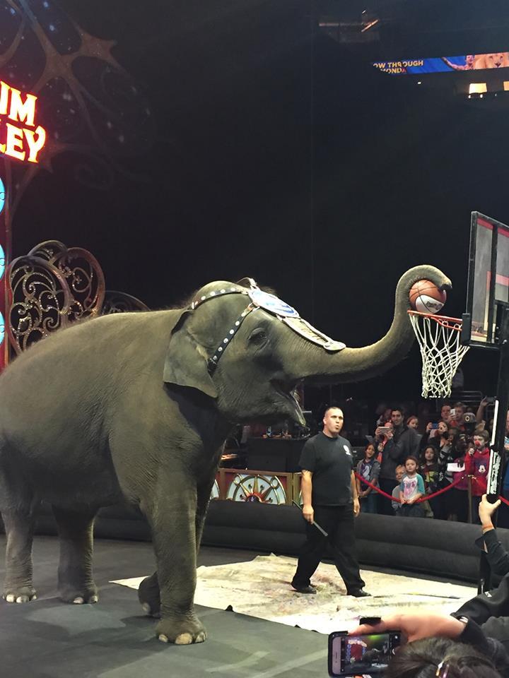 circus-elephant-basketball