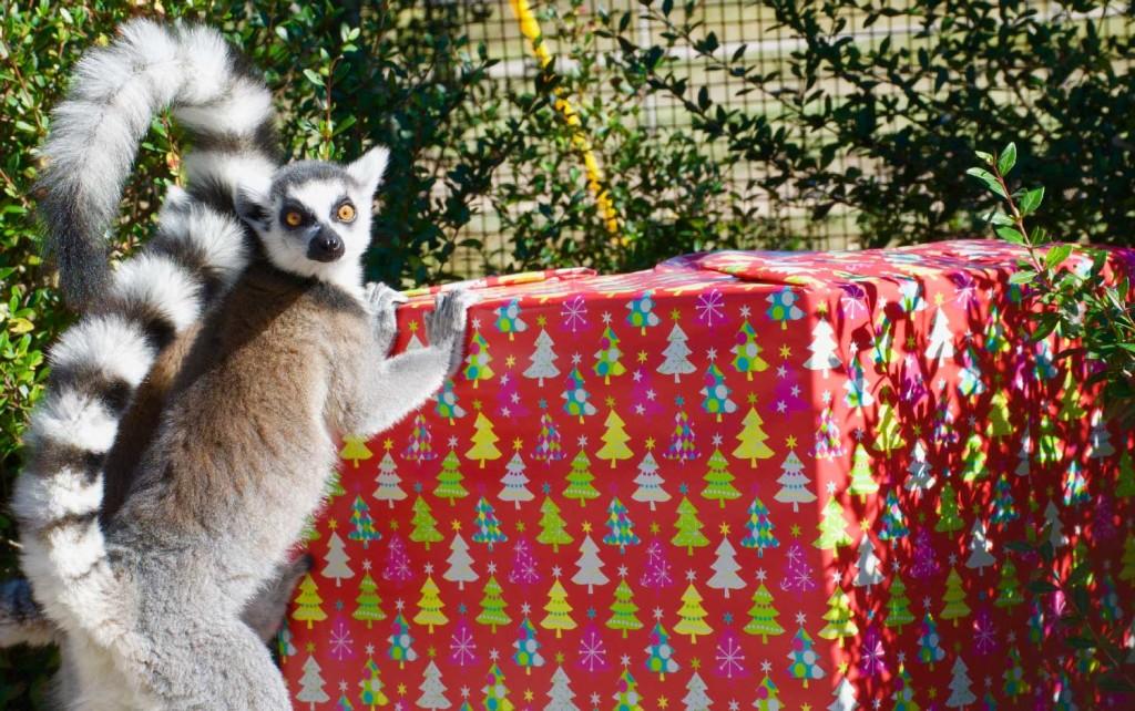 critter-christmas